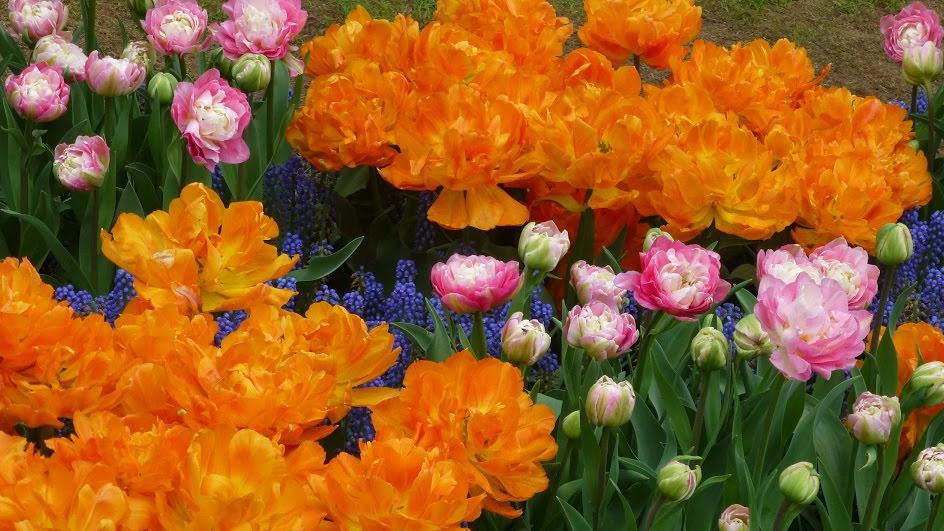 """Aiandusõpetaja Reet Palusalu: """"Lillesibulaid saab istutada, kuni labidas maasse läheb."""""""