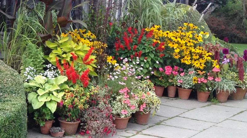 Terrassitaimed ja rõdutaimed – mida saab kasvatada?