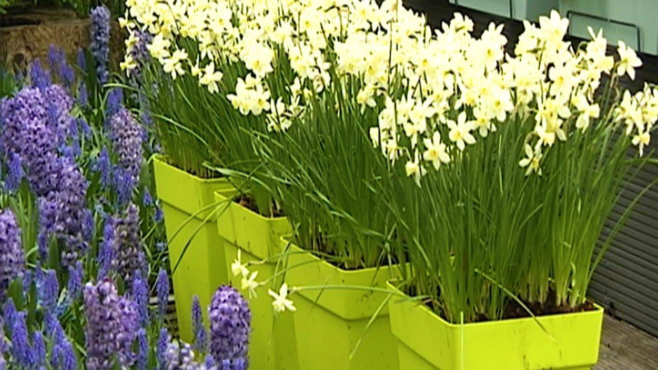 Varakevadine rõõm: Milliseid lilli istutada aprillis rõdule? Reet Palusalu nõuanded.